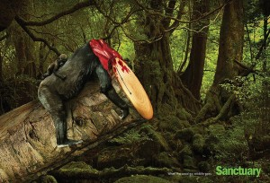 Deforestation - Importance of Quality Photo For Better Marketing